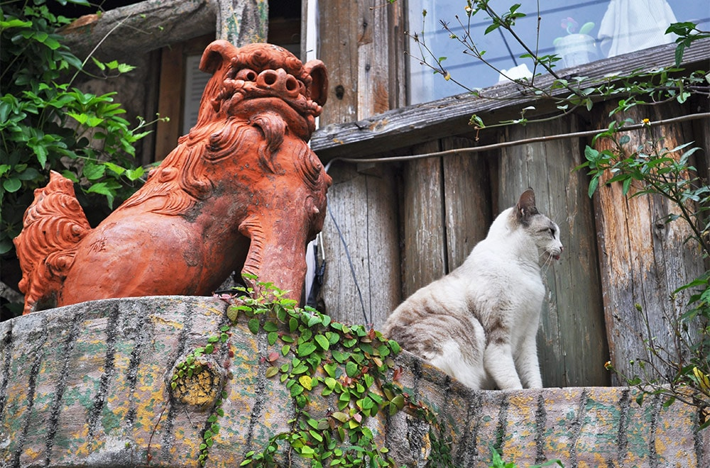 Traditional Okinawa Lion And A Cat